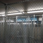 Chain link fence by Lovewell Fencing